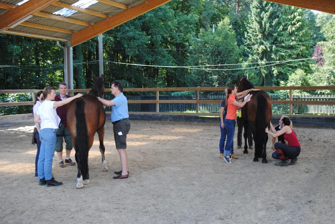 Chiropraktik für Pferde NRW Tierärztin Yvonne Boekholt Düsseldorf ...